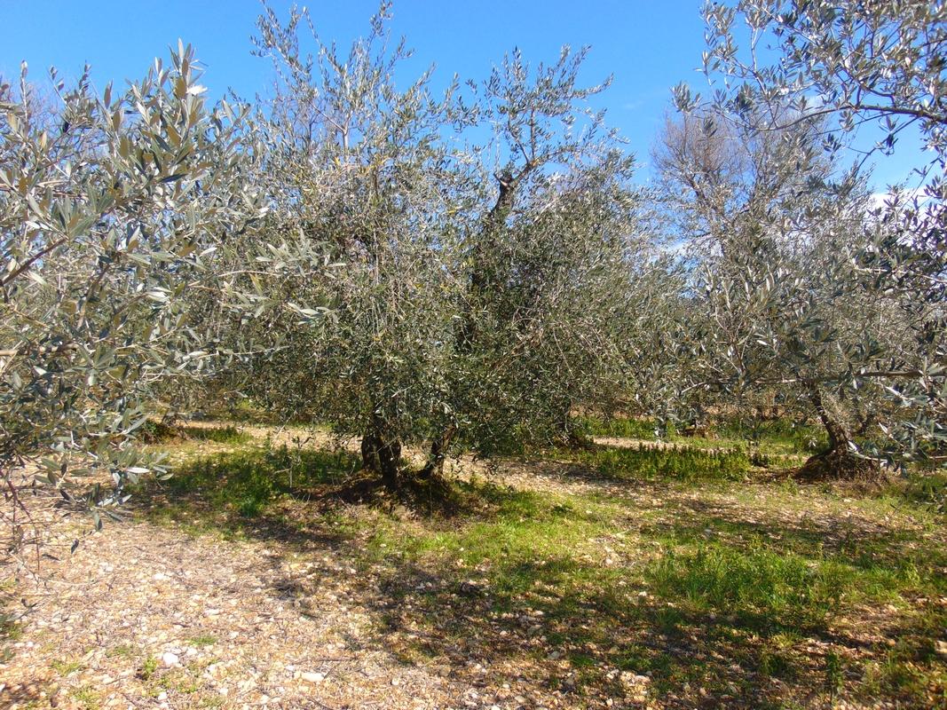 https://www.agriturismocircugnano.it/immagini_pagine/03-03-2018/1520074566-104-.jpg