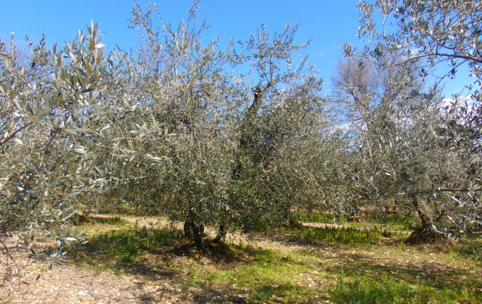 https://www.agriturismocircugnano.it/immagini_pagine/03-03-2018/1520074887-12-.jpg