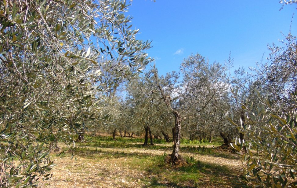 https://www.agriturismocircugnano.it/immagini_pagine/03-03-2018/1520074890-254-.jpg