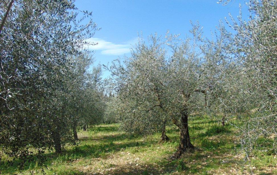 https://www.agriturismocircugnano.it/immagini_pagine/03-03-2018/1520074892-483-.jpg