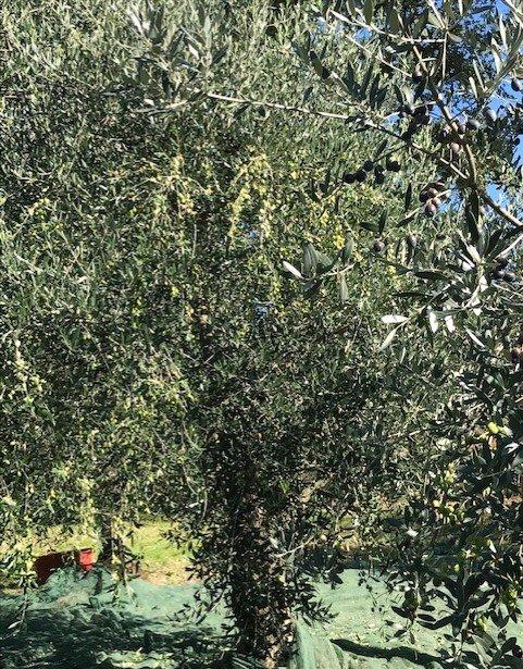 https://www.agriturismocircugnano.it/immagini_pagine/28-02-2021/1614536372-306-.jpg