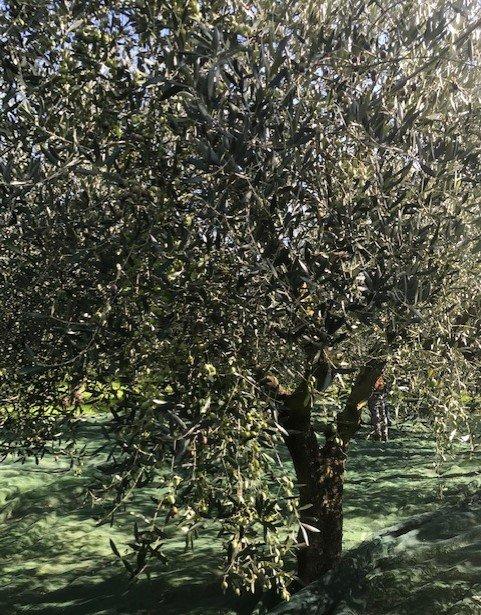 https://www.agriturismocircugnano.it/immagini_pagine/28-02-2021/1614536385-486-.jpg