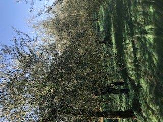 https://www.agriturismocircugnano.it/immagini_pagine/28-02-2021/1614536423-458-.jpg